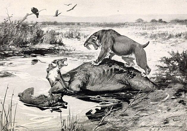 Smilodon and Canis Dirus mired in Tar Pits 630x440 - دایرولف ها : از واقعیت تا تخیلات جرج آر.آر مارتین