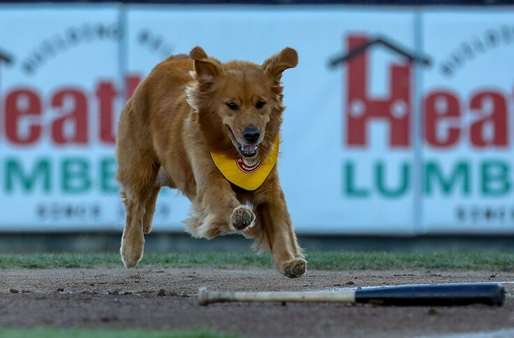 Rookie the Batdog got to visit Yankee Stadium earlier this week