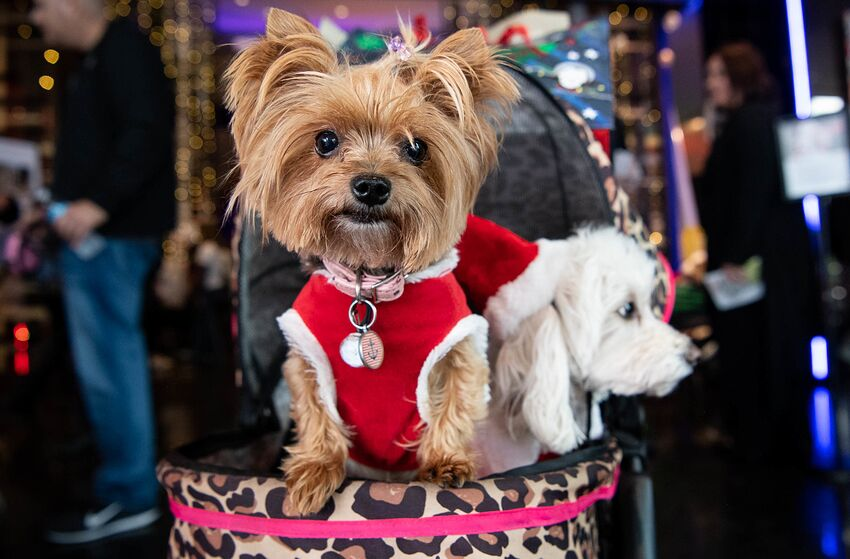 LOS ANGELES, CALIFORNIA - DECEMBER 14: Dogs are seen at 'Happy Pawlidays' at the Sofitel Los Angeles At Beverly Hills on December 14, 2019 in Los Angeles, California. (Photo by Emma McIntyre/Getty Images)