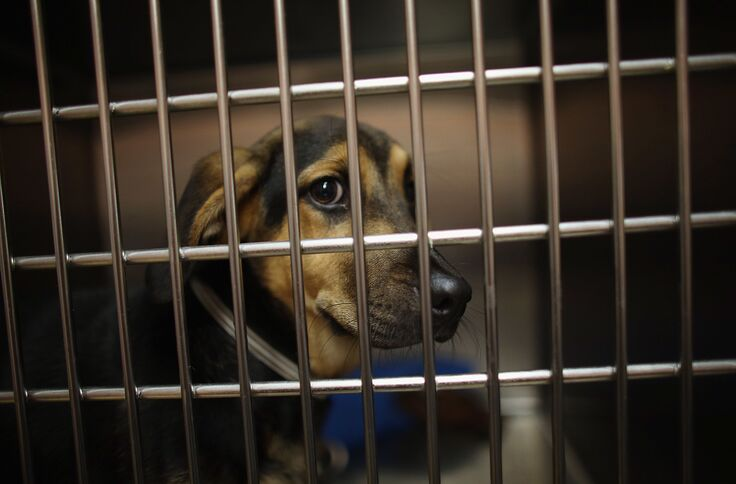 Animal shelter wants you raid them instead of Area 51