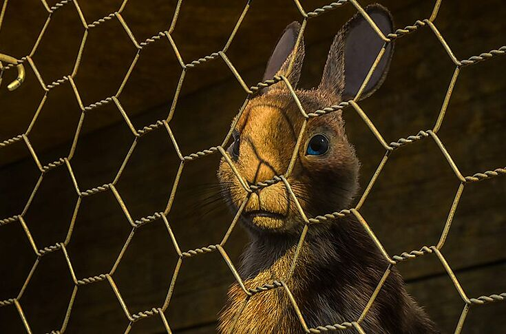 Netflix And Bbc Release Watership Down Teaser Photos Add To All Star