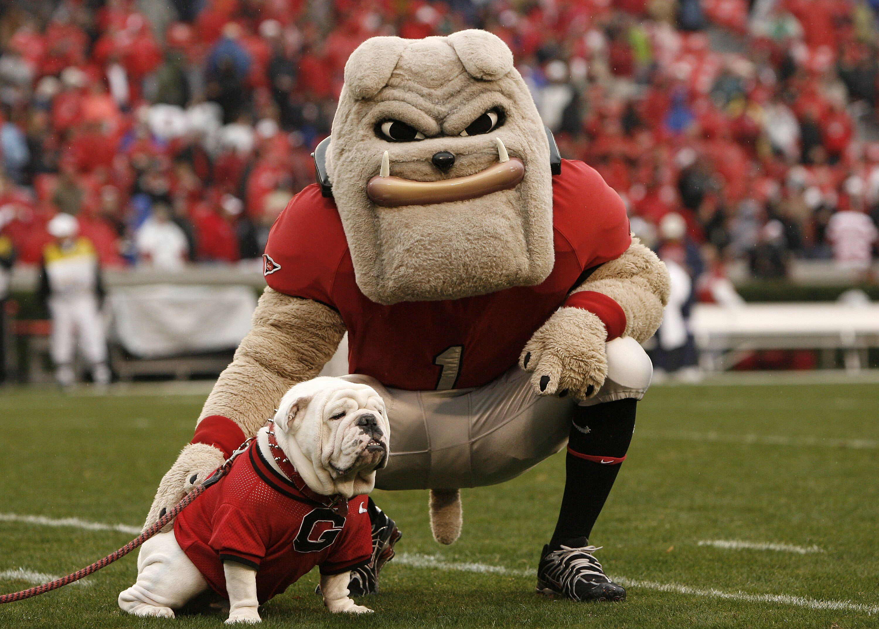 Image result for Georgia Bulldogs