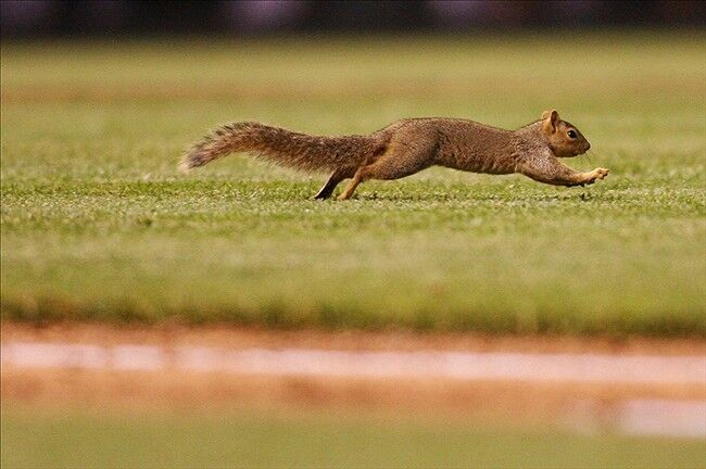 The Curse of the Squirrel Dooms Dodgers