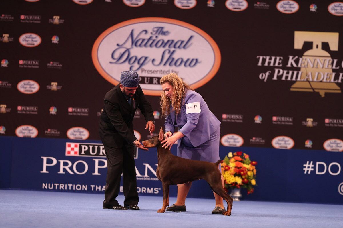 2018 national dog show presented by purina resutts