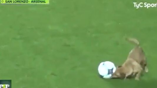 Adorable dog invades pitch during an Argentina soccer match (Video)