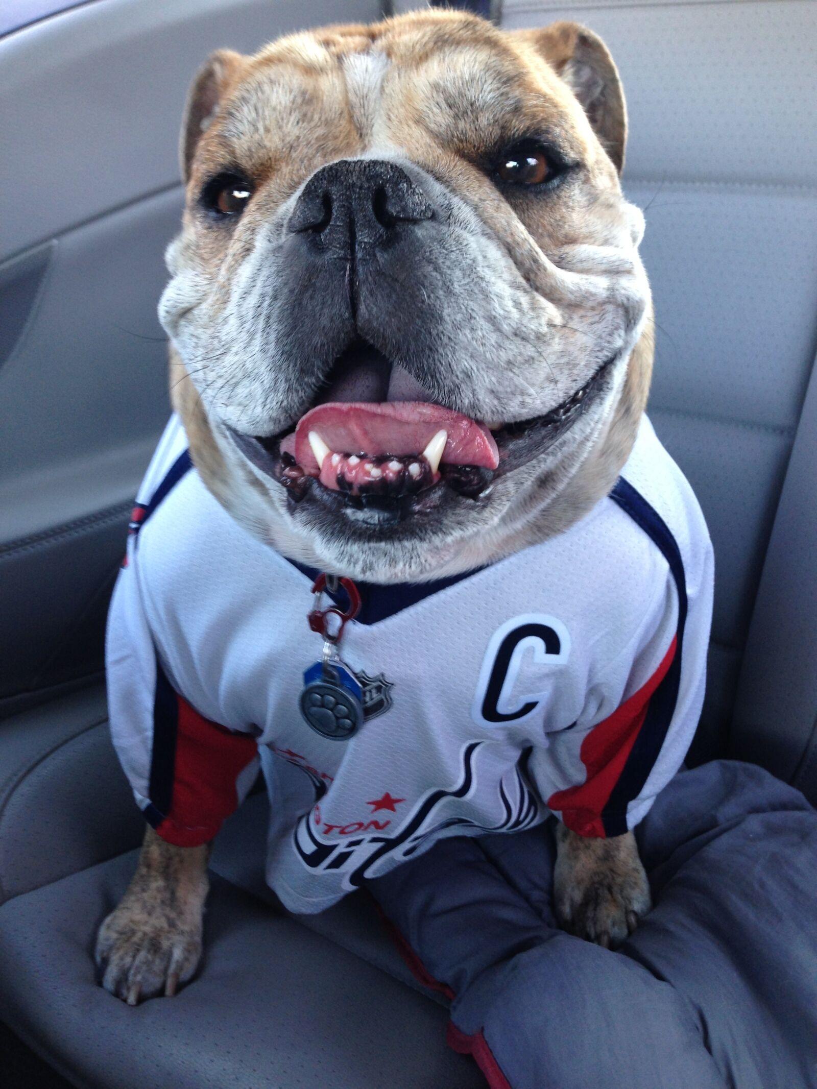 Ovie the Bulldog on hockey, friendship and snacks