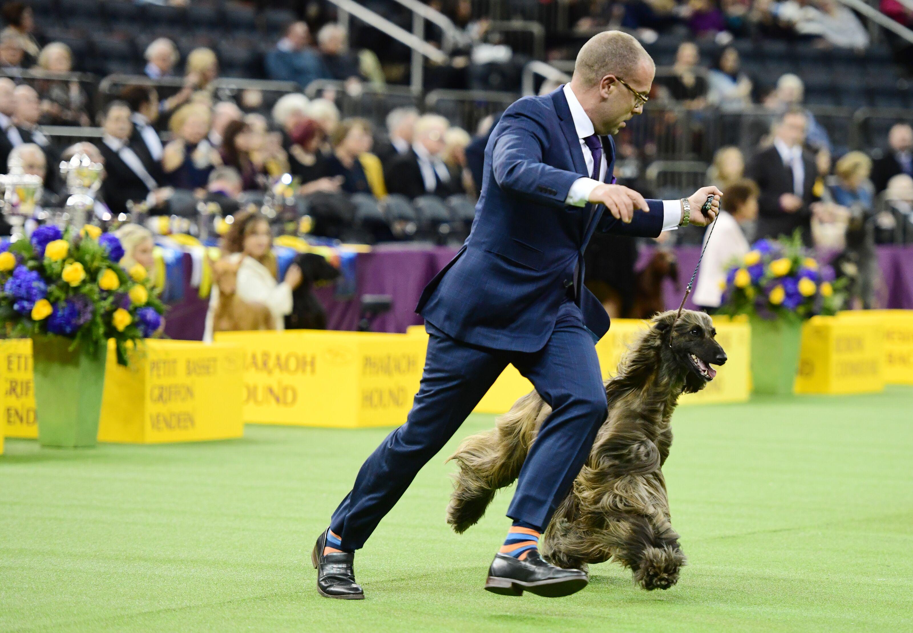 2019 Lawton Dog Fanciers Association Dog Show results