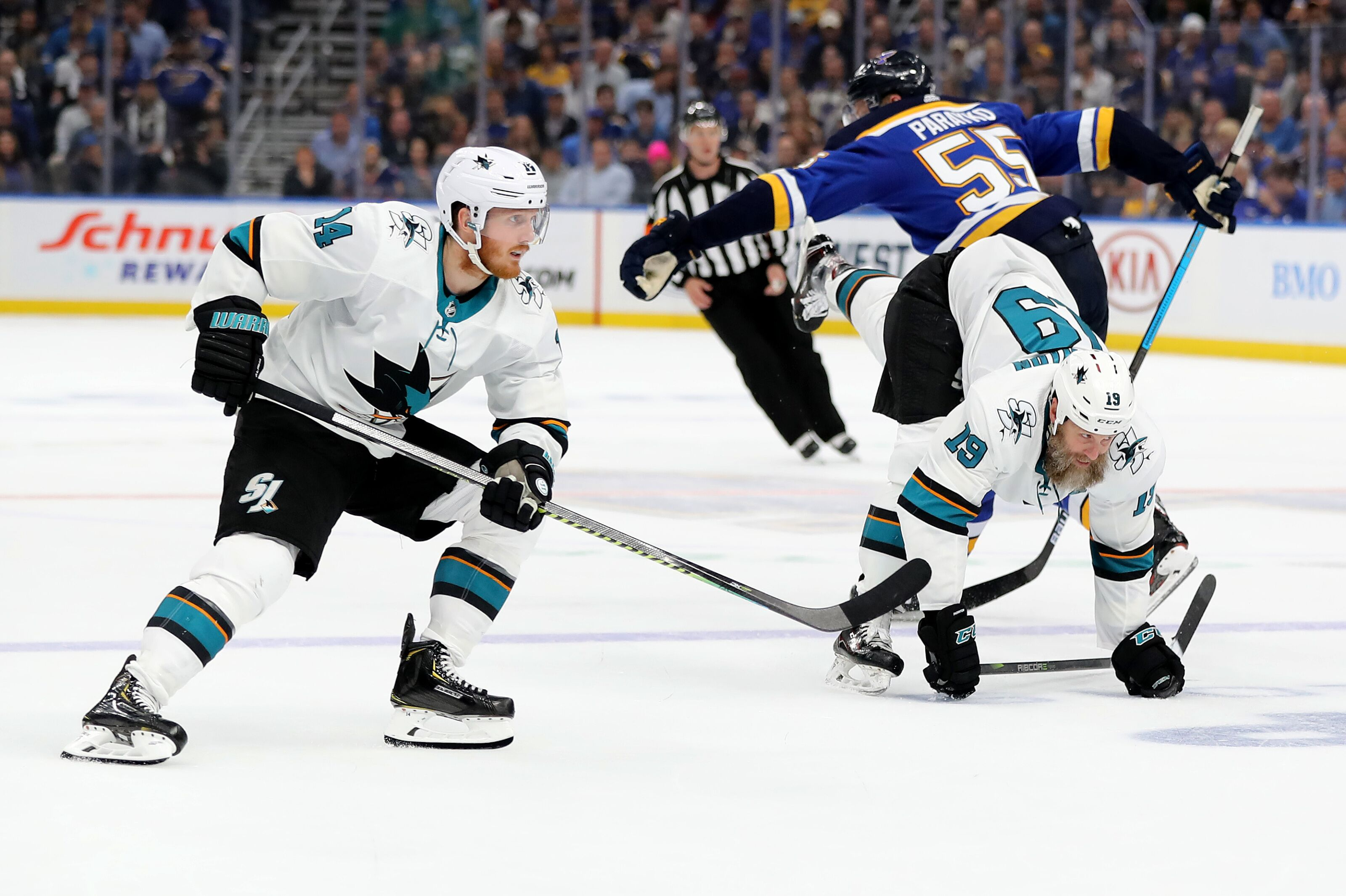 San Jose Sharks welcome Finn the Lab to NHL team dog roster