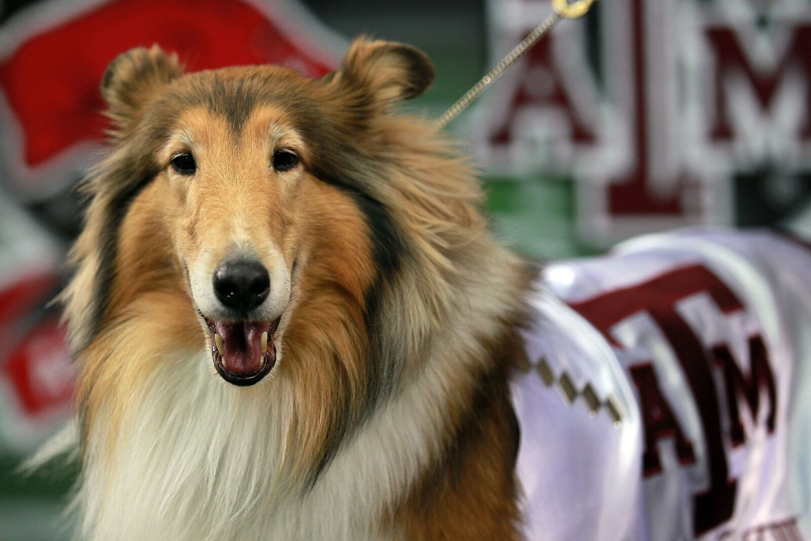 Canine college football roundup, Week 11