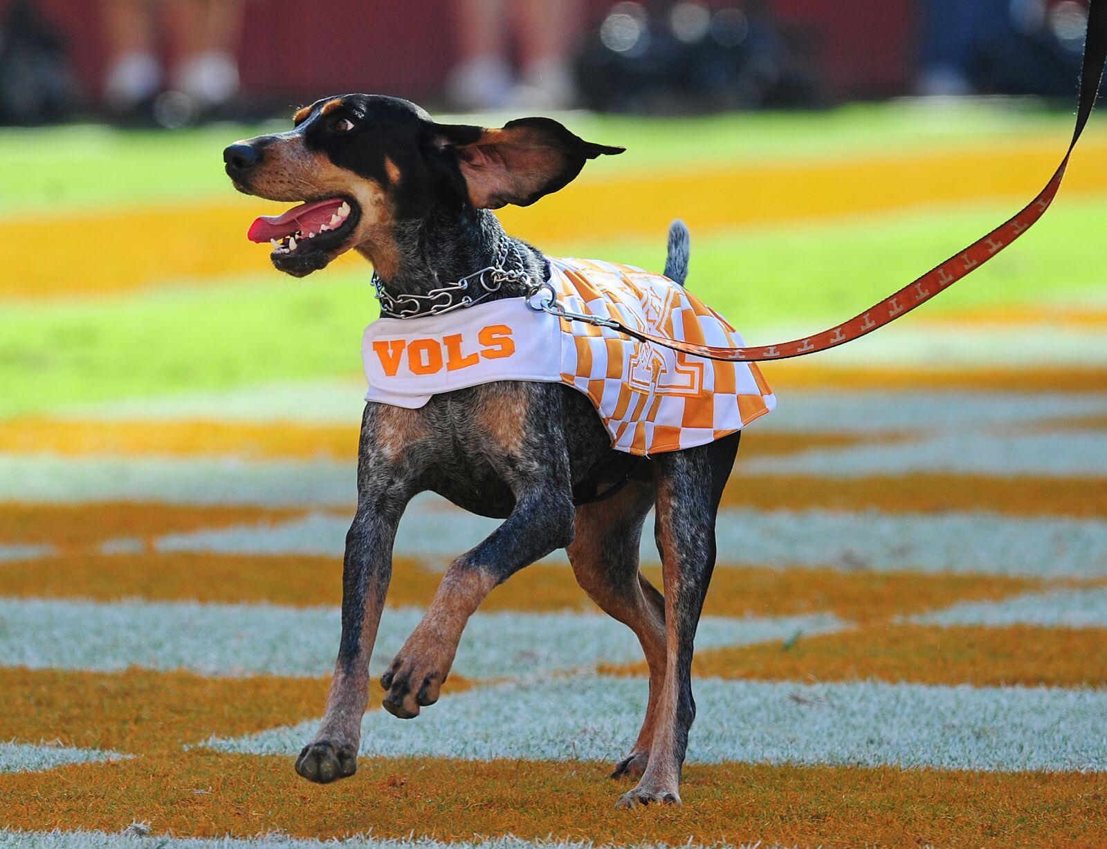 Canine college football roundup, Week 12