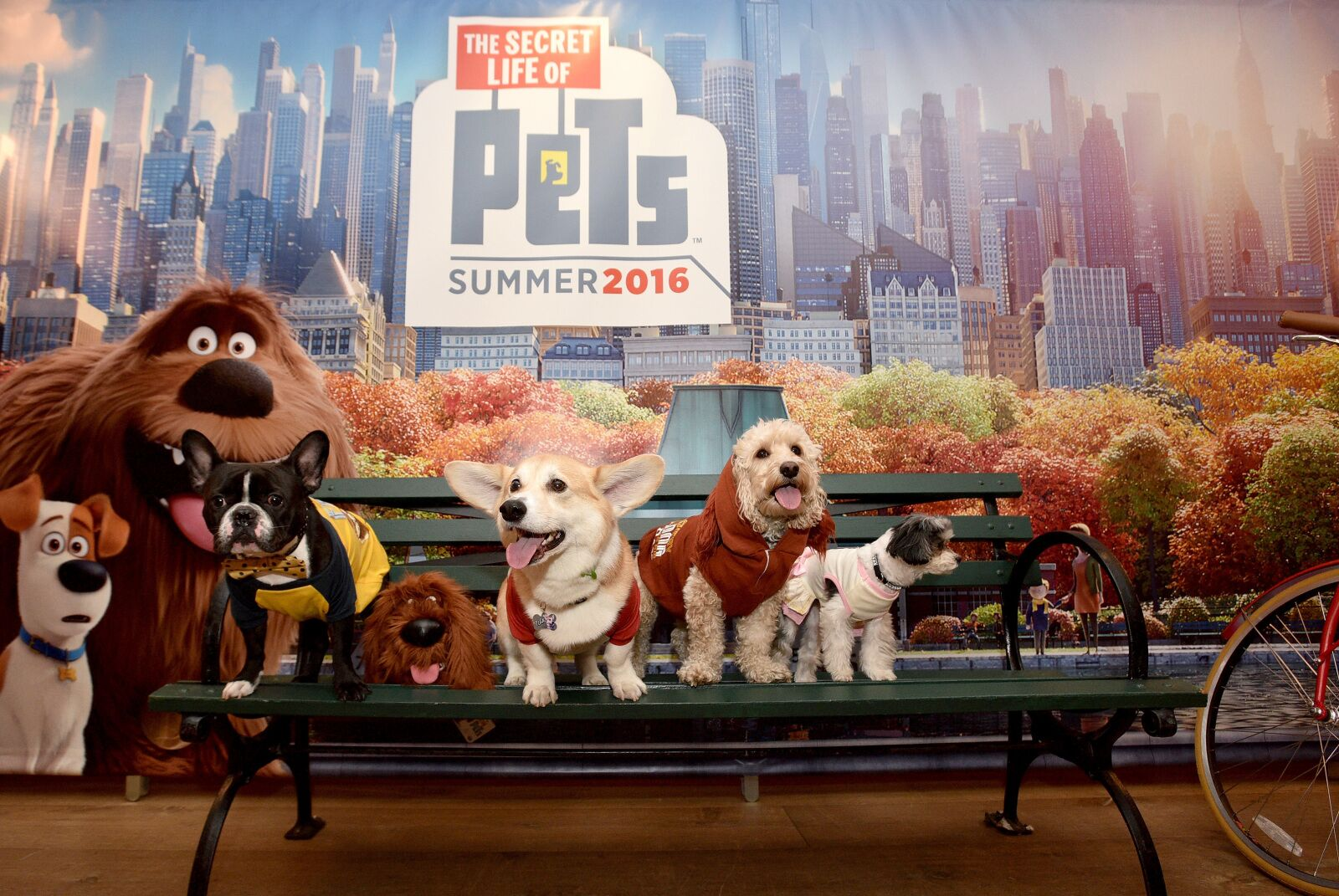 Secret Life of Pets 2 reveals the truth about those puppy accidents