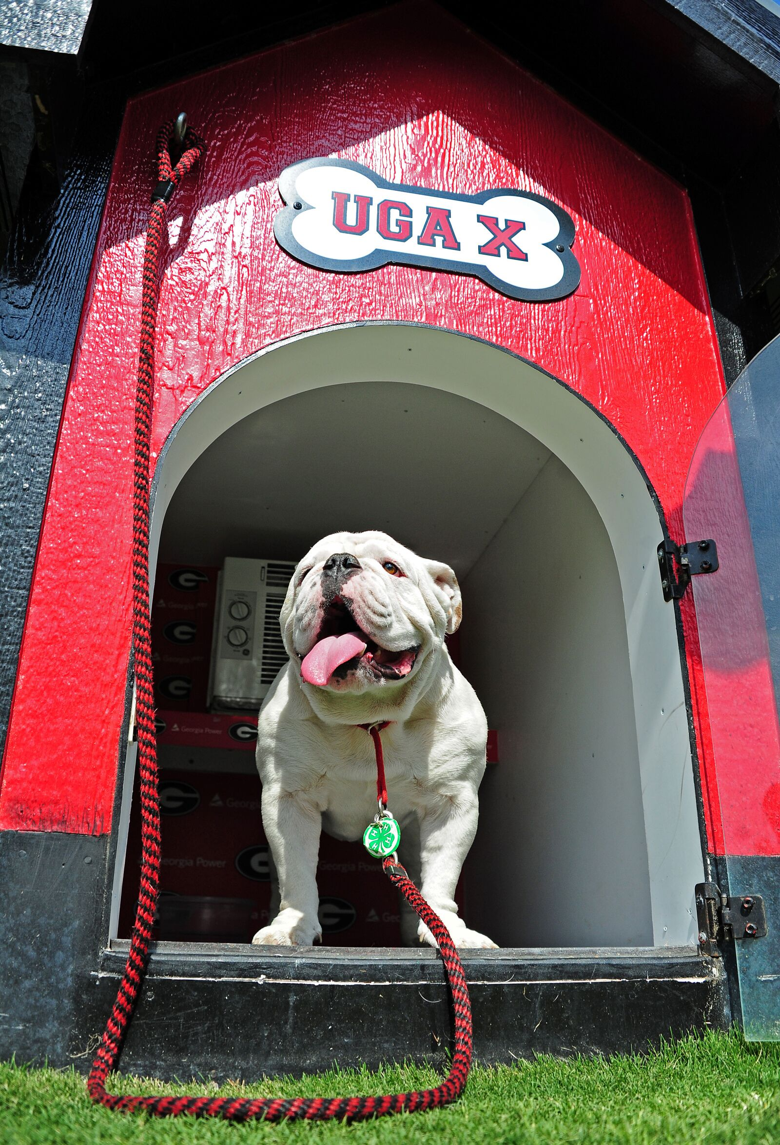 2019 canine college football roundup: Week 4