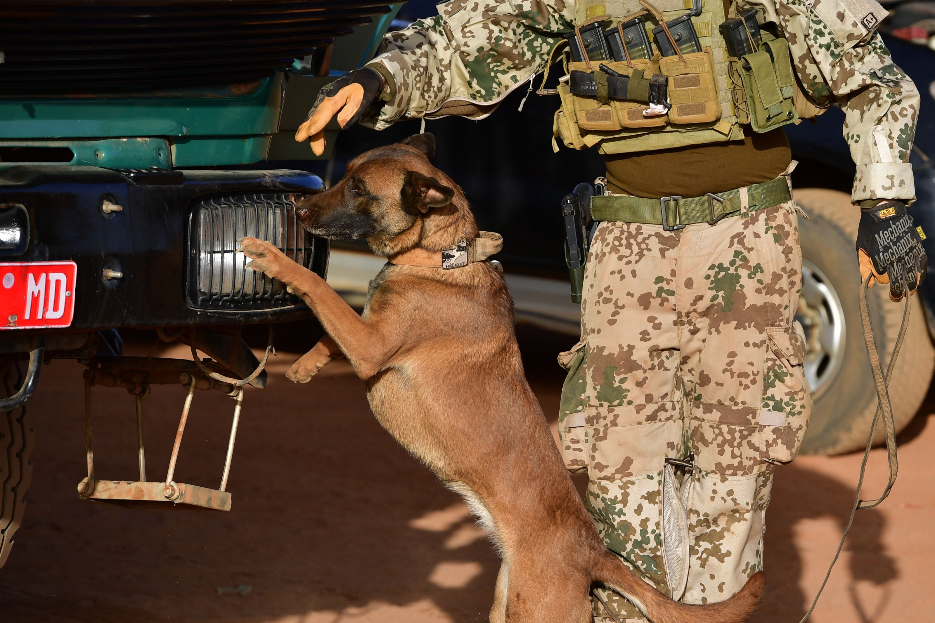 Military working dogs are seeking homes for retirement