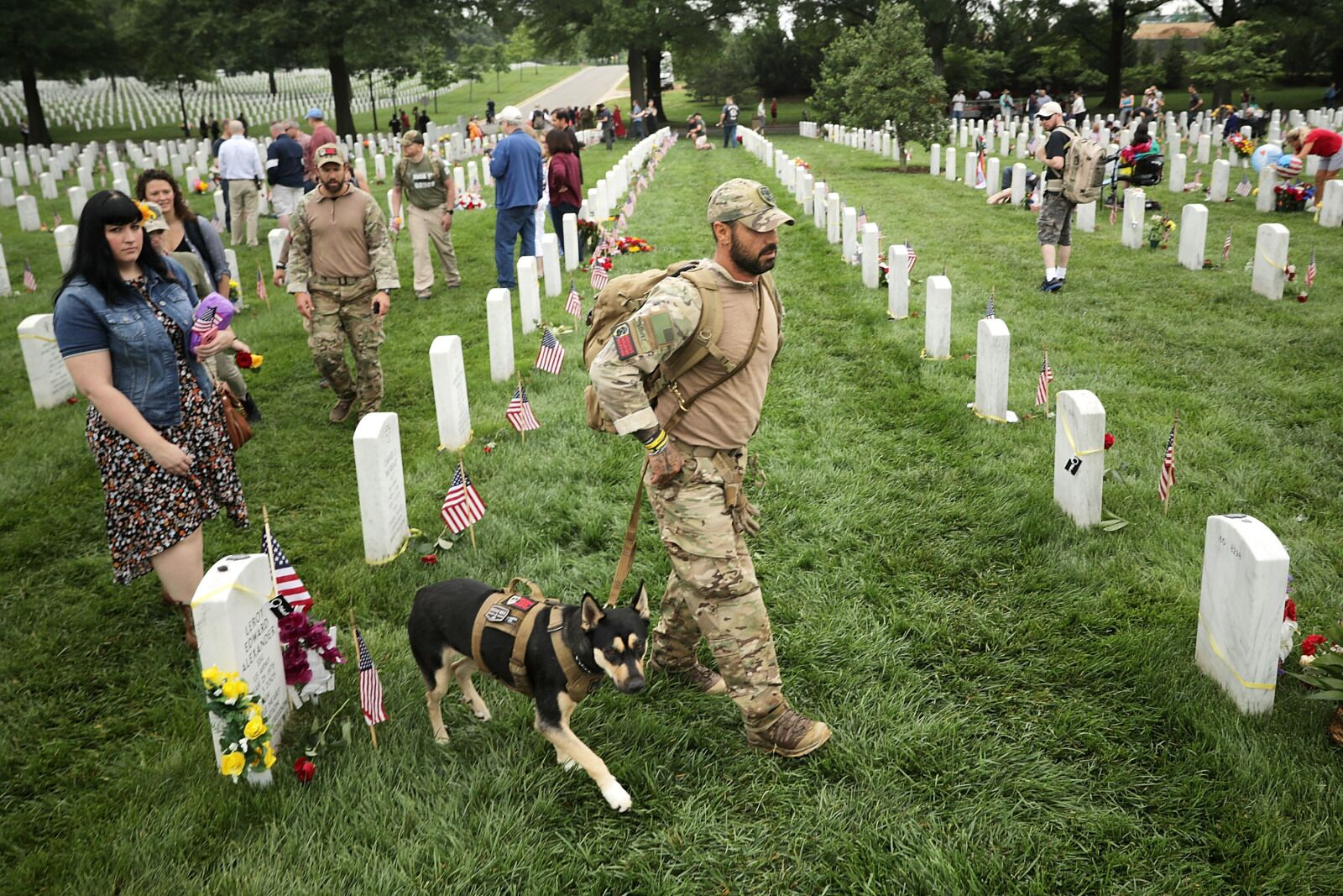 AKC Museum of the Dog celebrates Memorial Day weekend