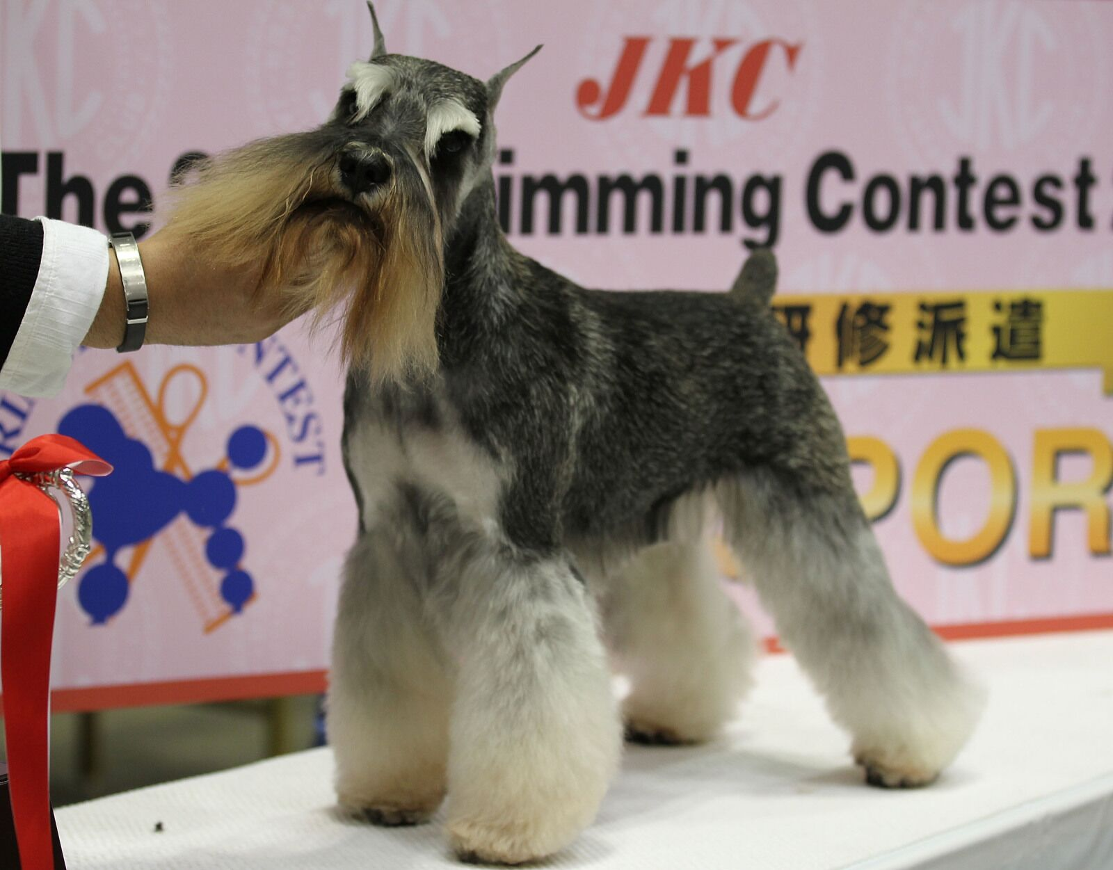 Breeds 101: Geting to know the Standard Schnauzers