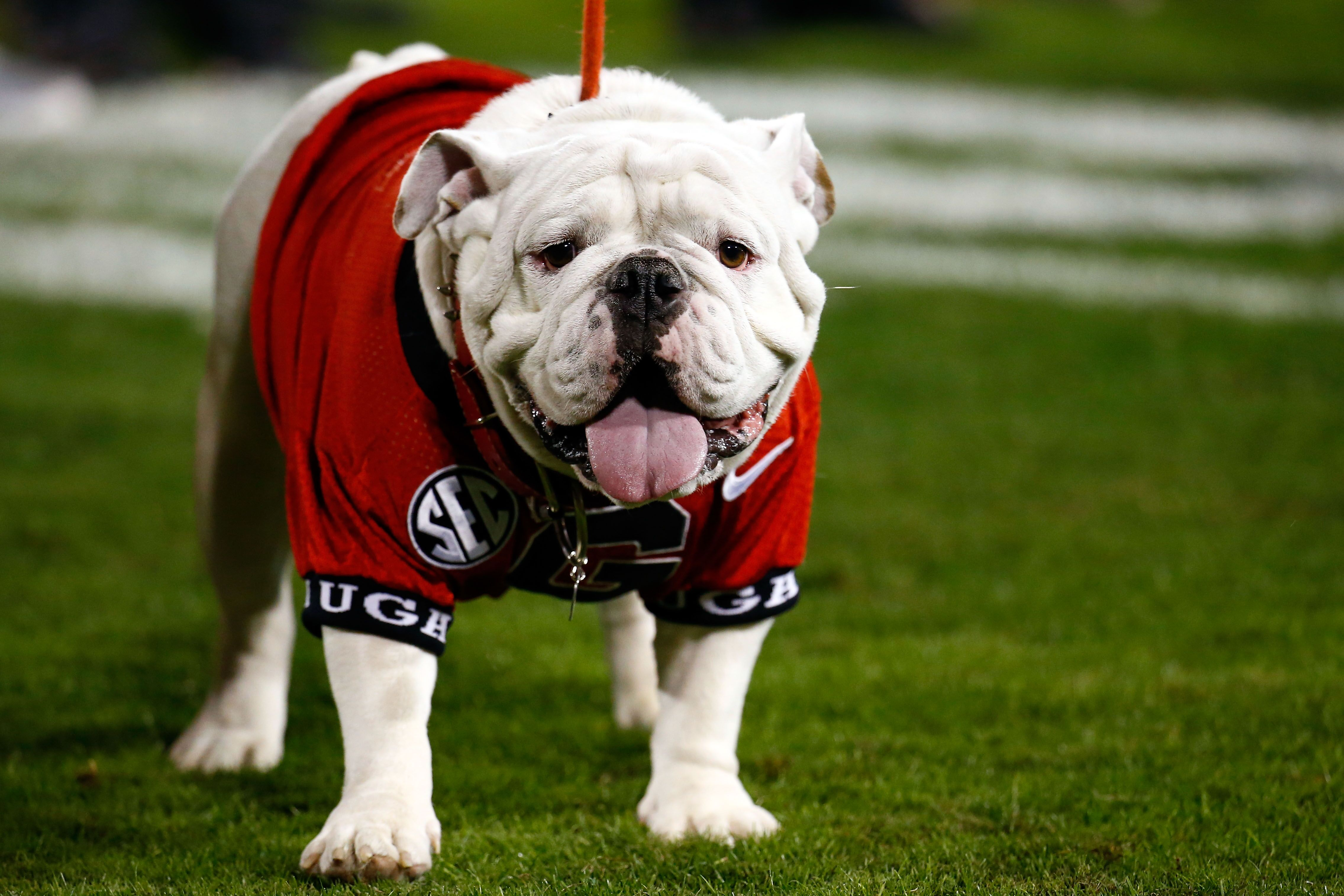 Canine college football roundup for Championship Saturday