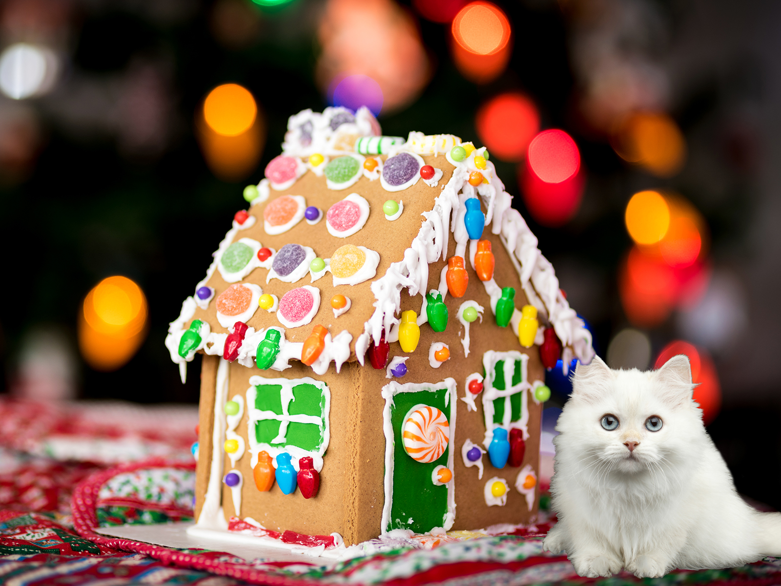 Build a Gingerbread House for Your Cat