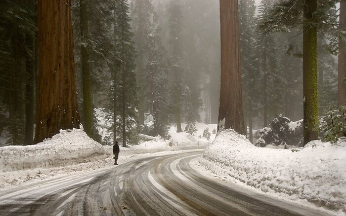 Sequoias Parks Kings Canyon National Park Winter