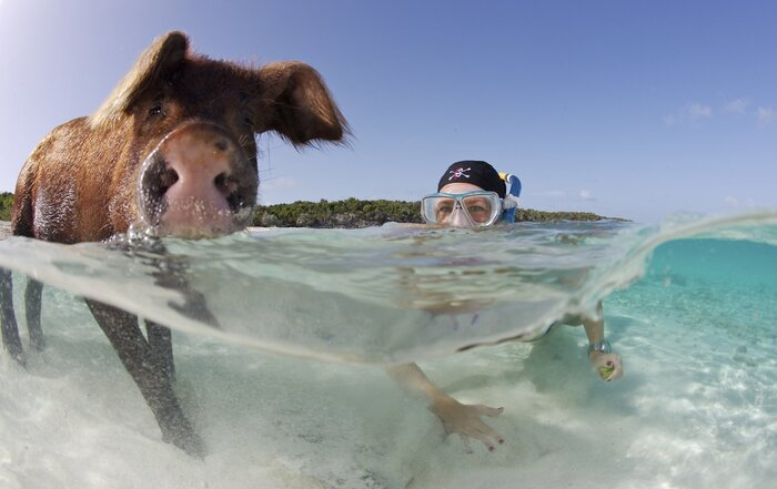 Everything To Know About Swimming With Pigs In The Bahamas Travel Leisure