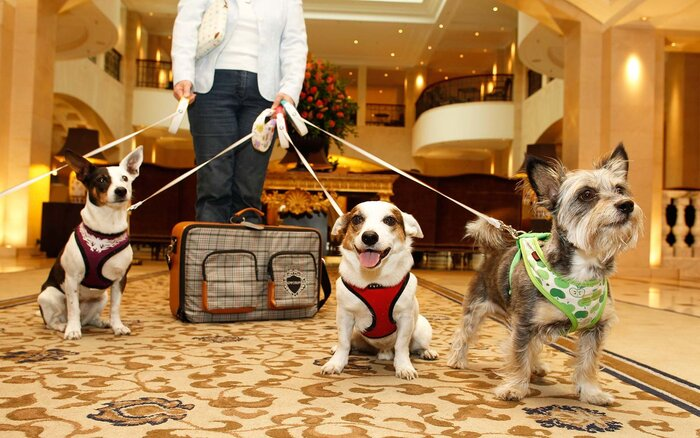 Famous Pet Friendly Hotels in the World