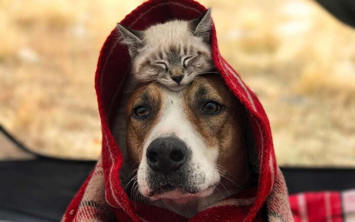 This Dog And Cat Are Best Friends And Theyre Traveling The World - Cat and dog duo take the best travel photos ever