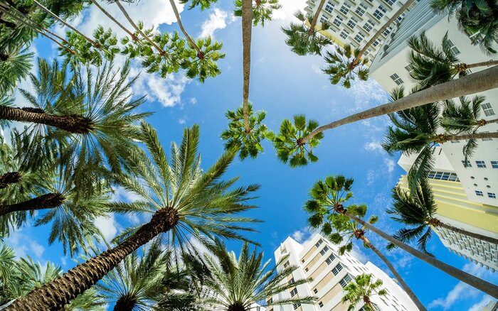 Cheap Flights To Florida Are Starting At Roundtrip This - Cheap trips to miami