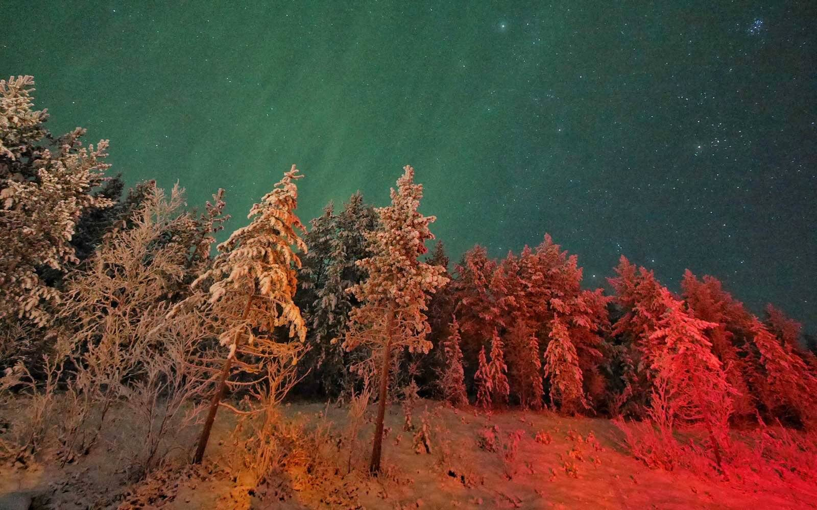 Northern lights glowing over a forest in Murmansk, Russia