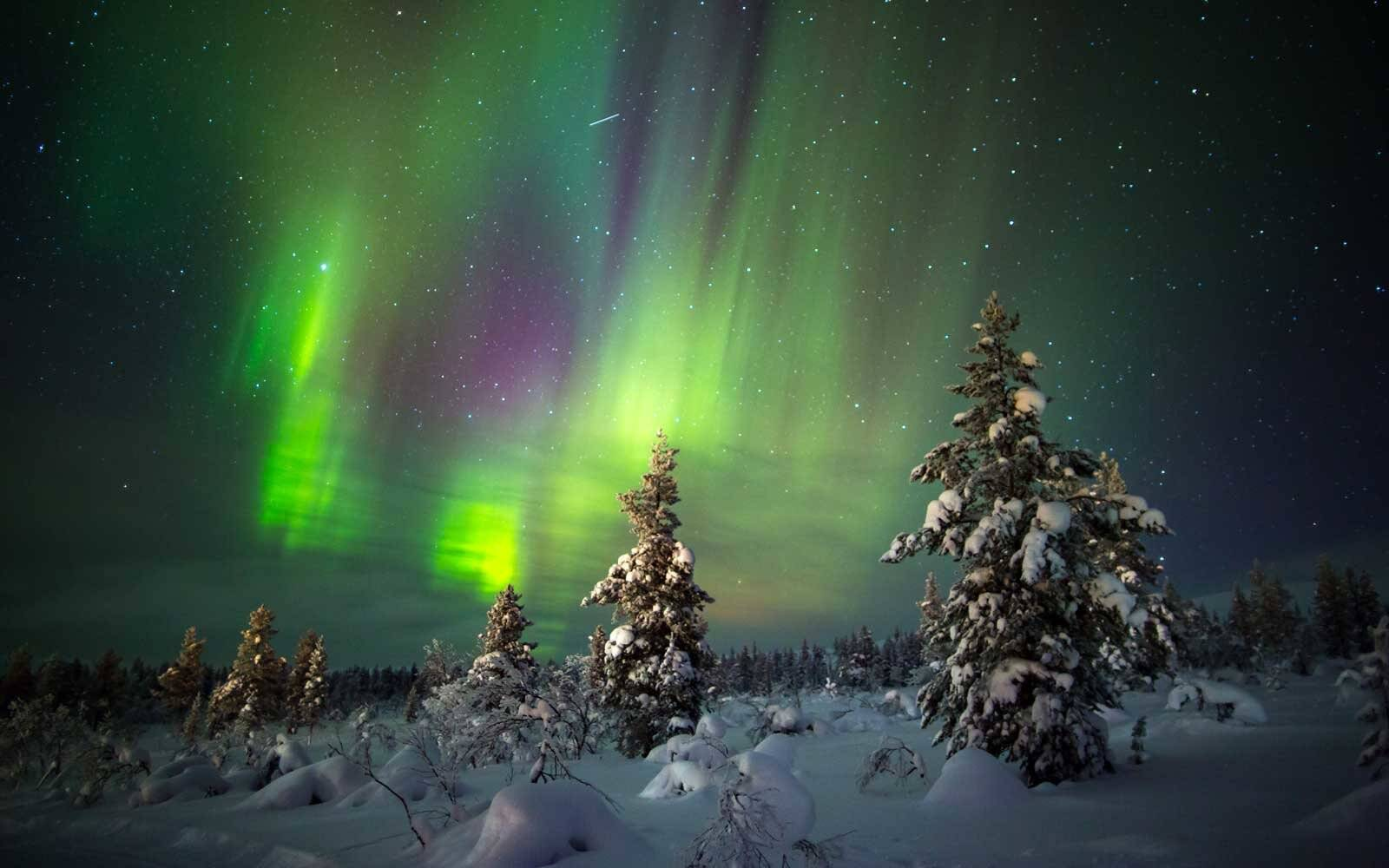 Aurora borealis over trees in Saariselka, in Lapland, Finland.