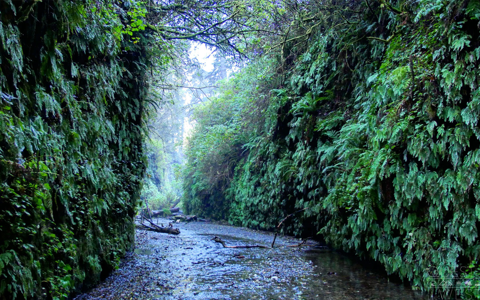 fern canyon redwoods national park
