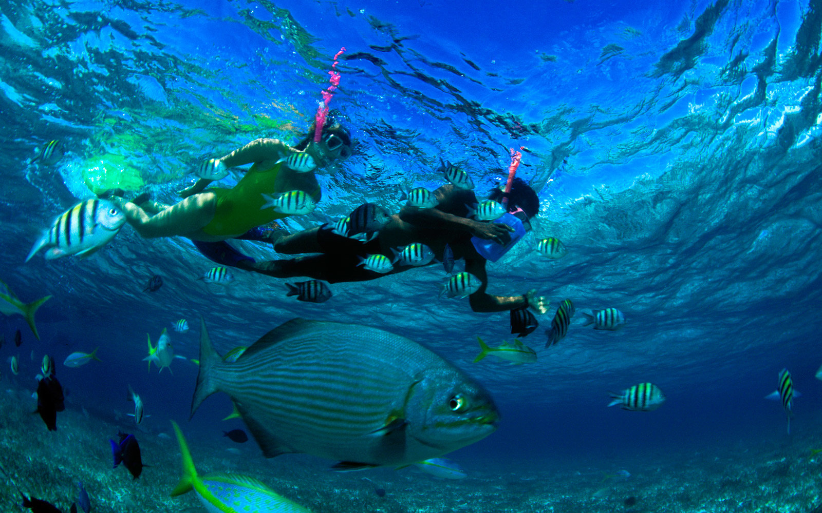 Two people snorkelling in blue water near tropical fish.