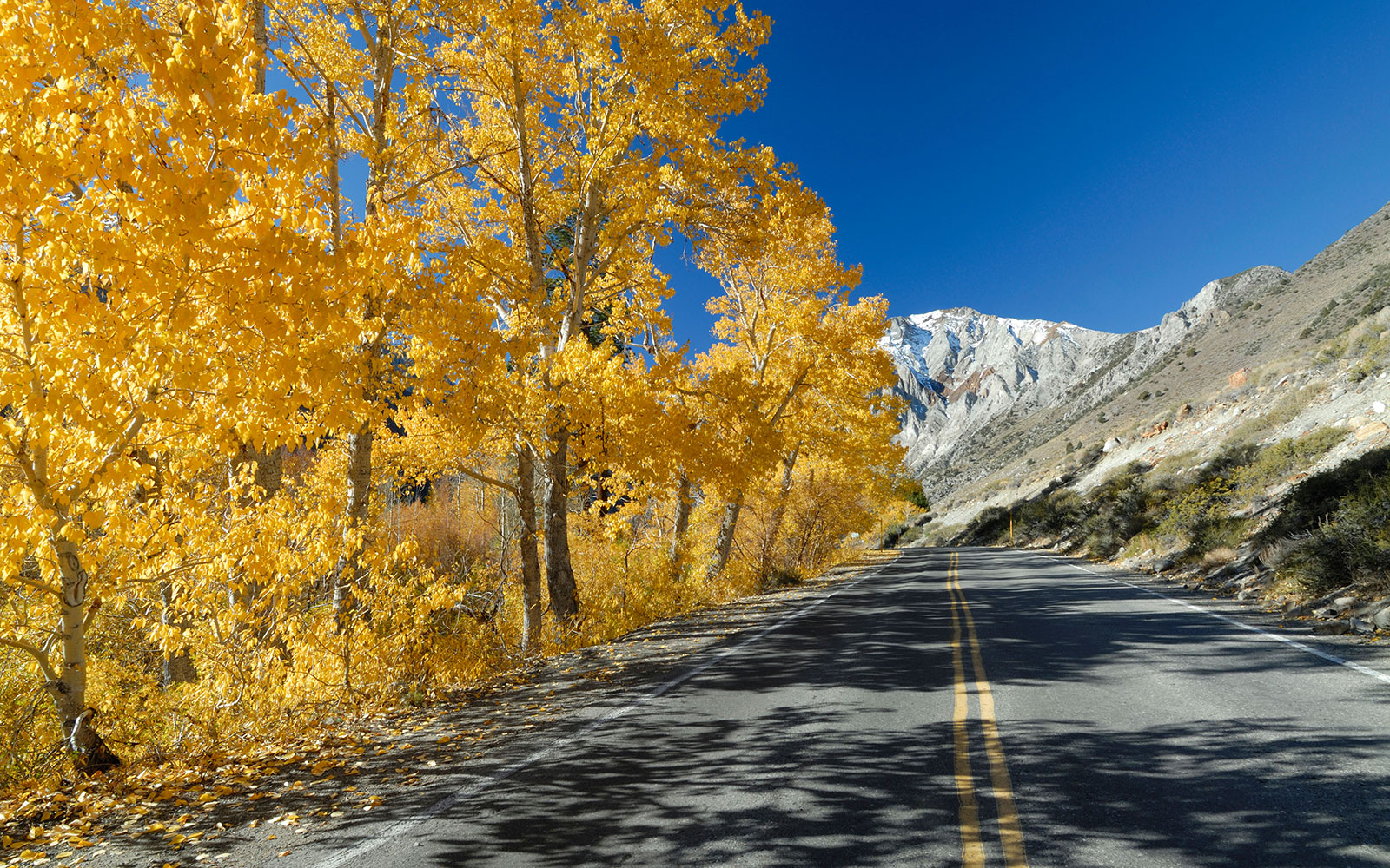 mountain roads through foliage in the Eastern Sierras, CA