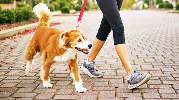 Image result for walk your dog