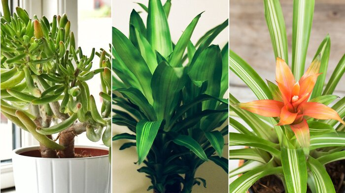 Air Purifying Indoor Plants - Health.com - Health