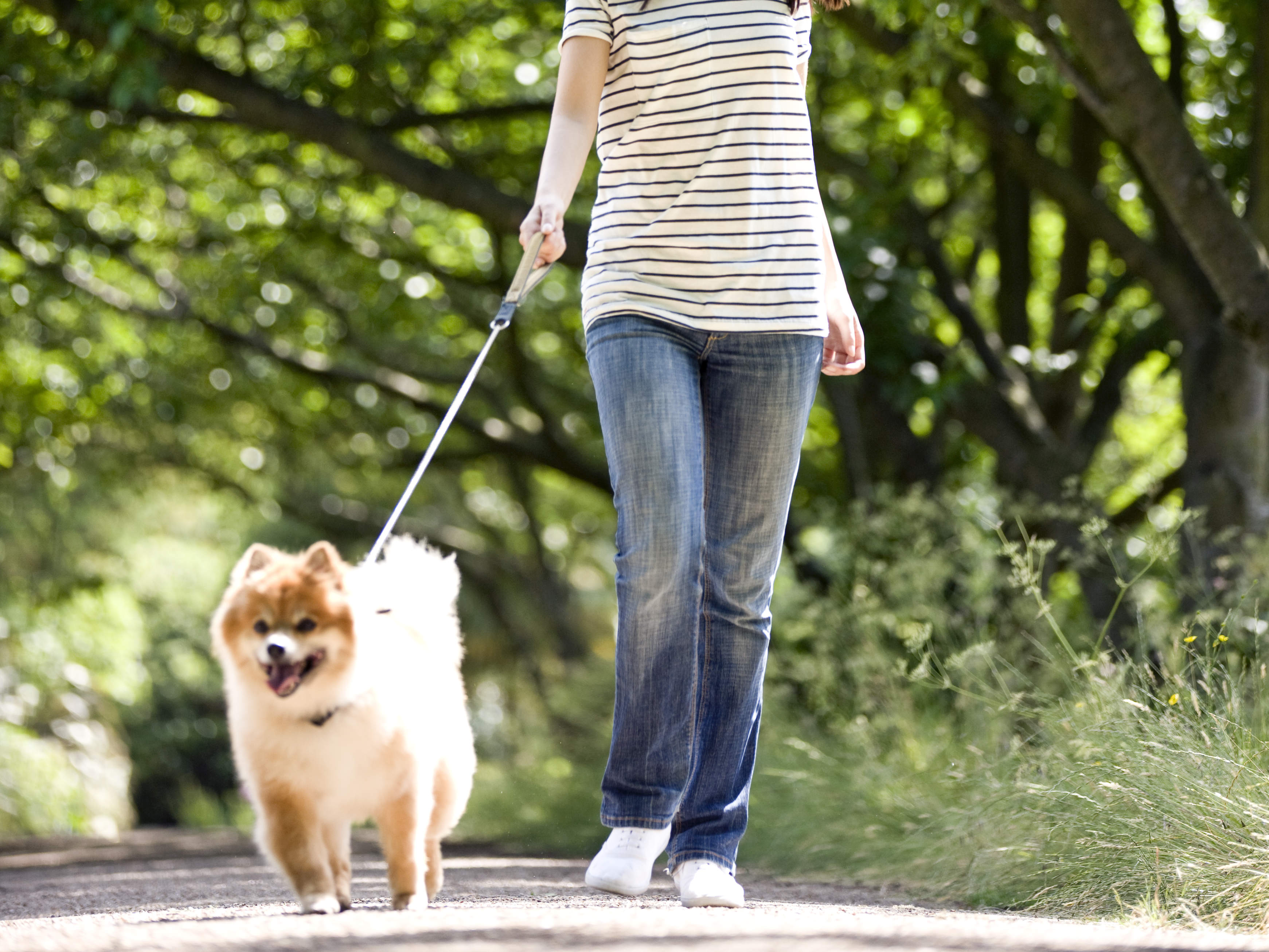 weight-loss-stripes-walking-dog