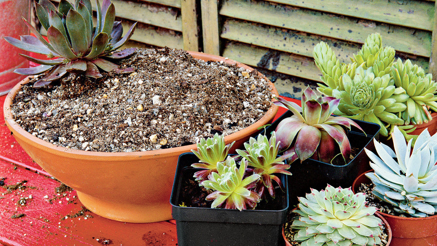 Planting Succulent Containers: Step Three
