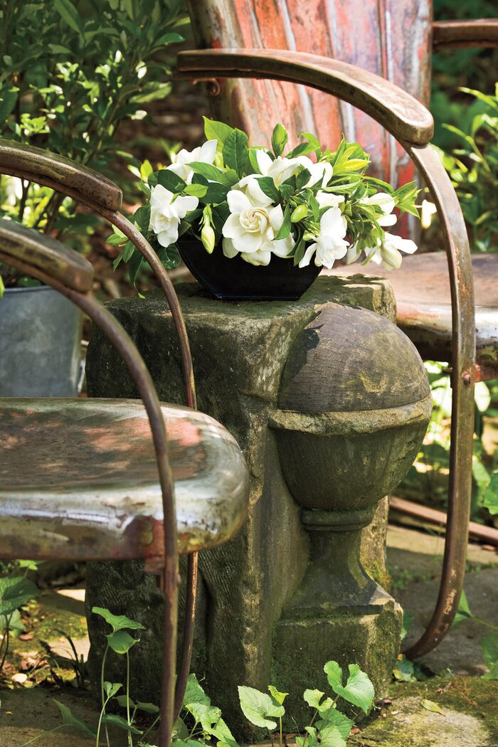 Southern Gardening Charleston S 5 Iconic Plants Living Lawn Garden Equipment And Supplies At Lowe