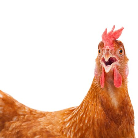 Lab Grown Chicken You Can Pay For Now And Eat In 2021 Food Wine