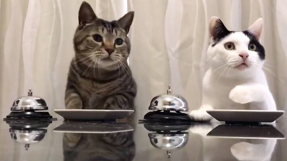 We Cant Stop Watching These Cats Ringing A Bell And Getting Treats