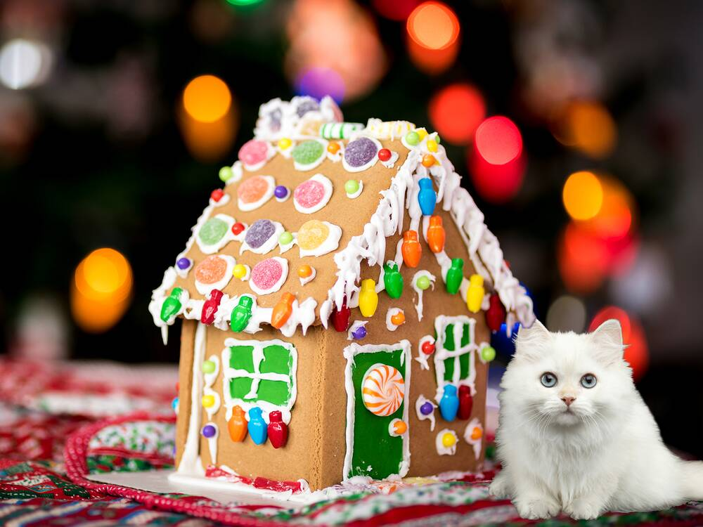 Gingerbread House For Cats