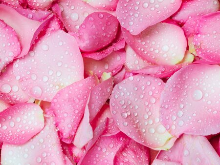 How To Cook With Rose Water The One Ingredient That S Missing From