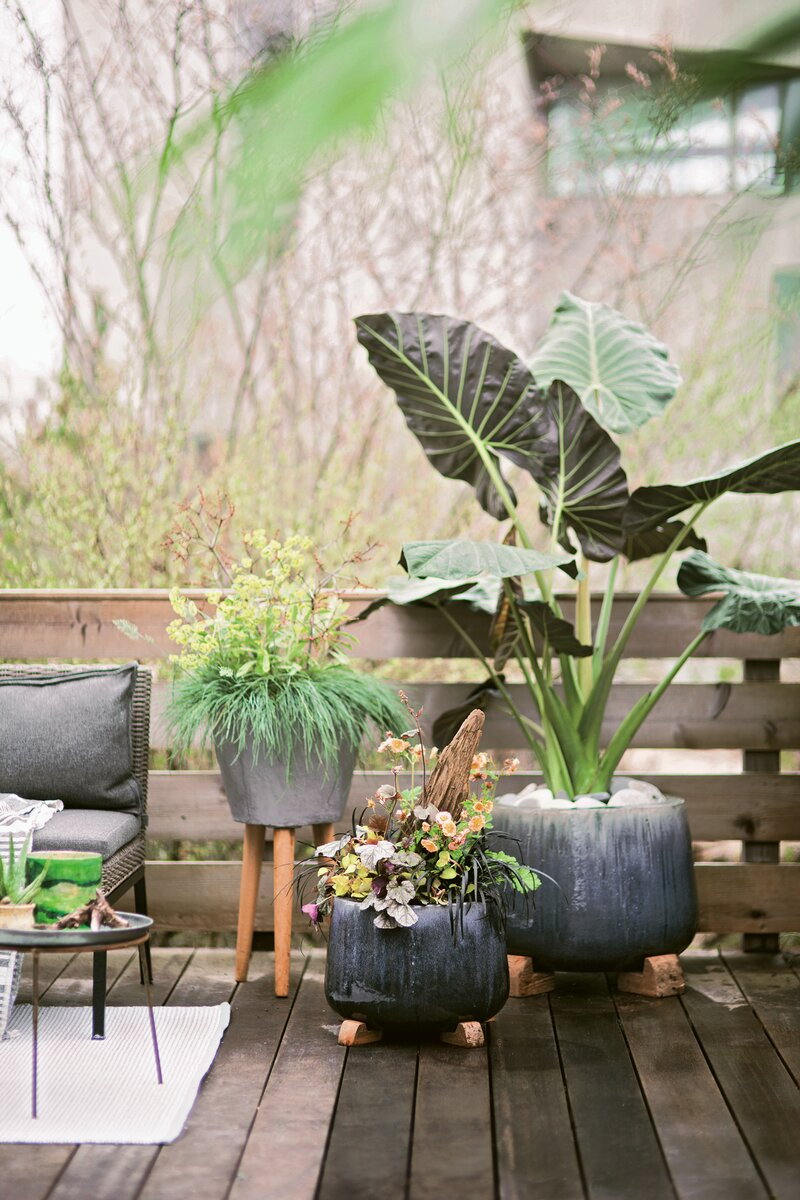 Container gardening ideas and tips - Terrain book excerpt DO NOT CLONE OR USE ANYWHERE ELSE