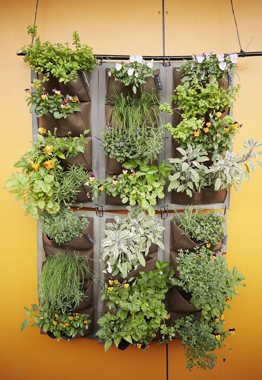 How to Grow a Vertical Garden | Real Simple