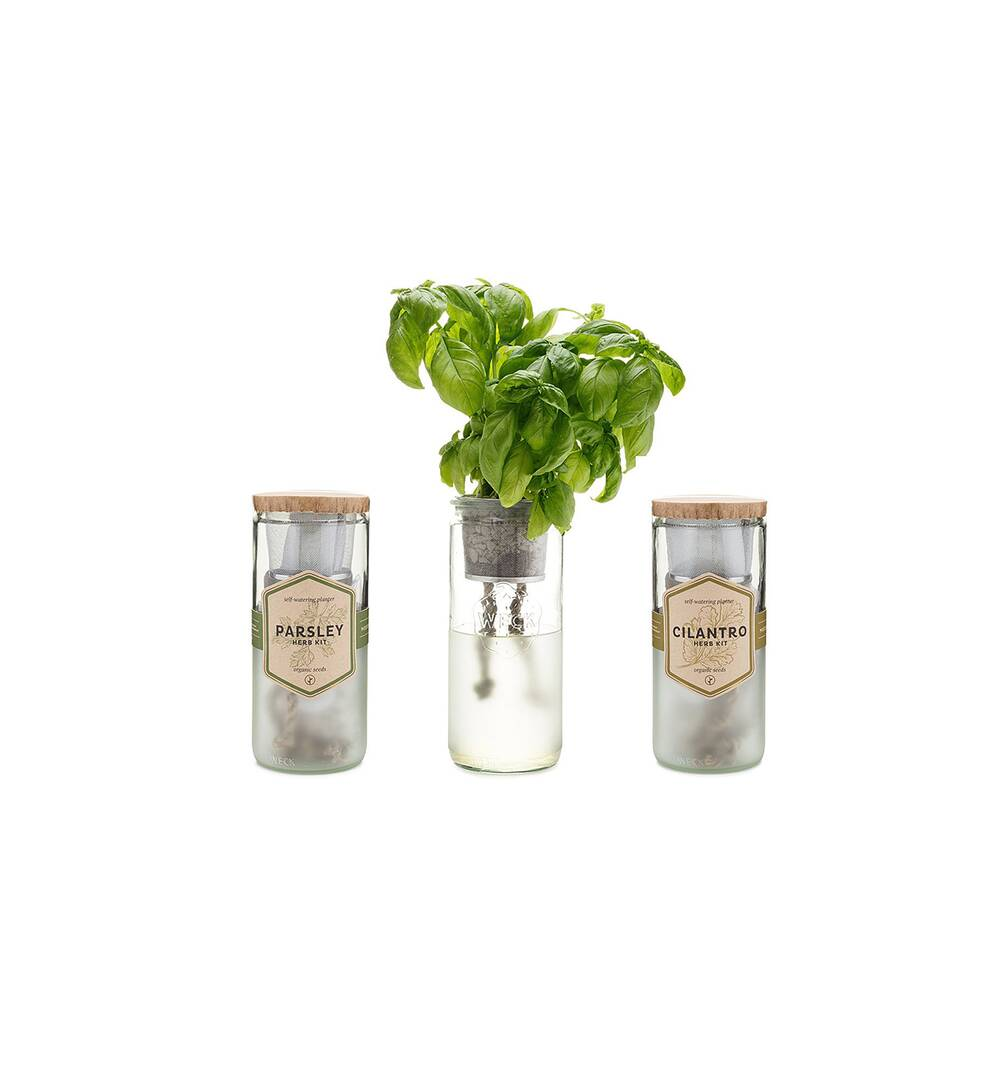 This Indoor Herb Garden Kit Makes Growing Basil Ridiculously Easy ...