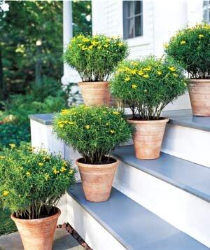Potted Gardens Easy container gardens real simple several outdoor plants on stairs workwithnaturefo