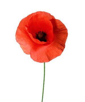 6 pretty flowers and their symbolic meanings real simple poppy mightylinksfo Image collections