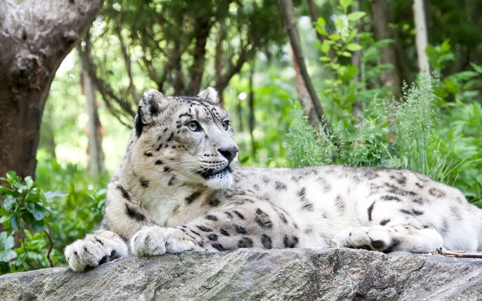 Afghanistan Wants You To Come See Its Snow Leopards Travel Leisure