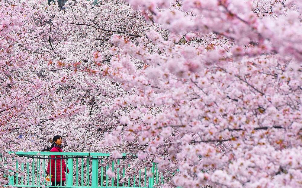 Lesser Known Places In An To See Cherry Blossoms