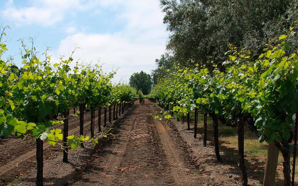 the top vineyards all around the u s travel leisure
