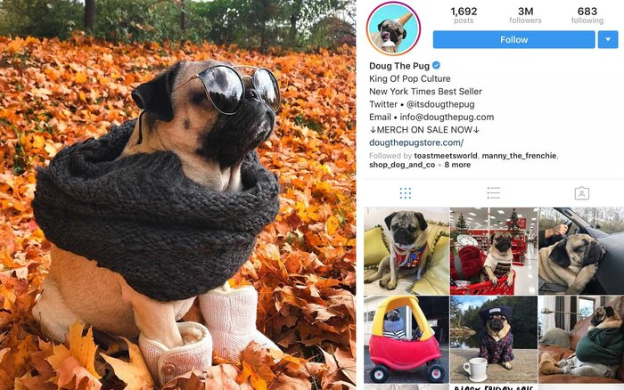 The most popular pets on instagram in 2017 are seriously adorable doug the pug itsdougthepug pug us 3m followers m4hsunfo