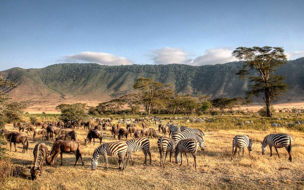 how to book the best safari in tanzania travel leisure